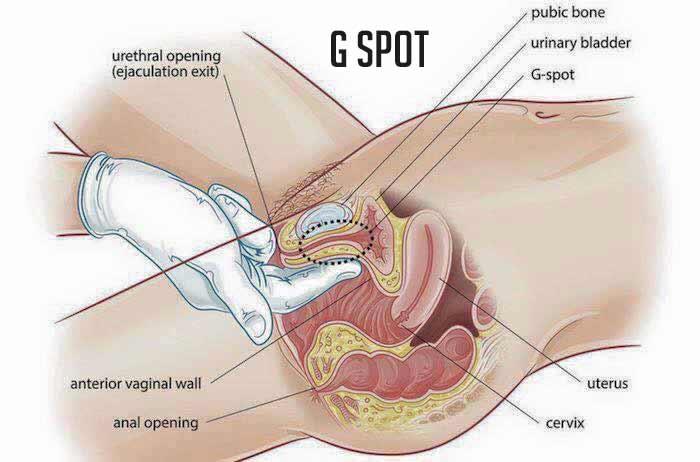 Gynicoplastie d'une injection de point G Liban